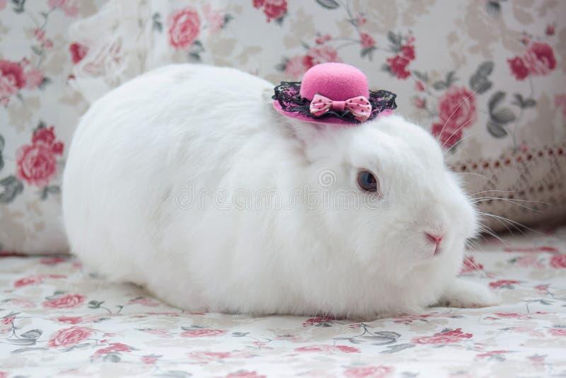 White rabbit in beatuful pink bonnet. Closeup stock photos
