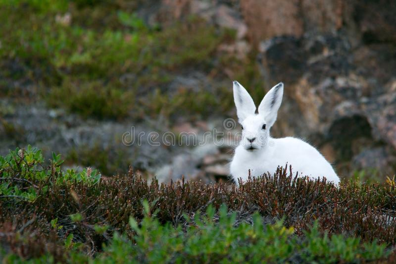 White Rabbit On Brown And Green Grass Field During Daytime Free Public Domain Cc0 Image