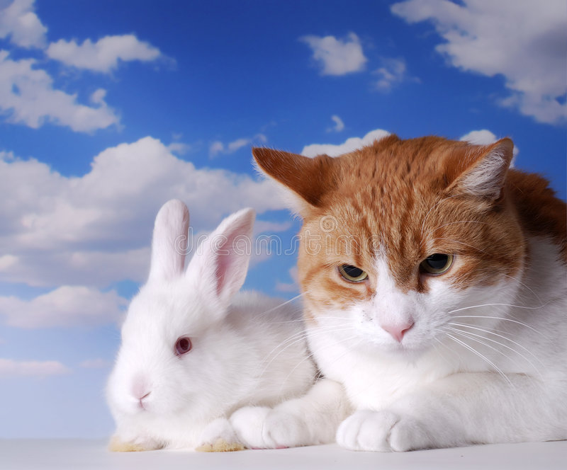 White Rabbit and Cat. Sitting next to each other stock photography