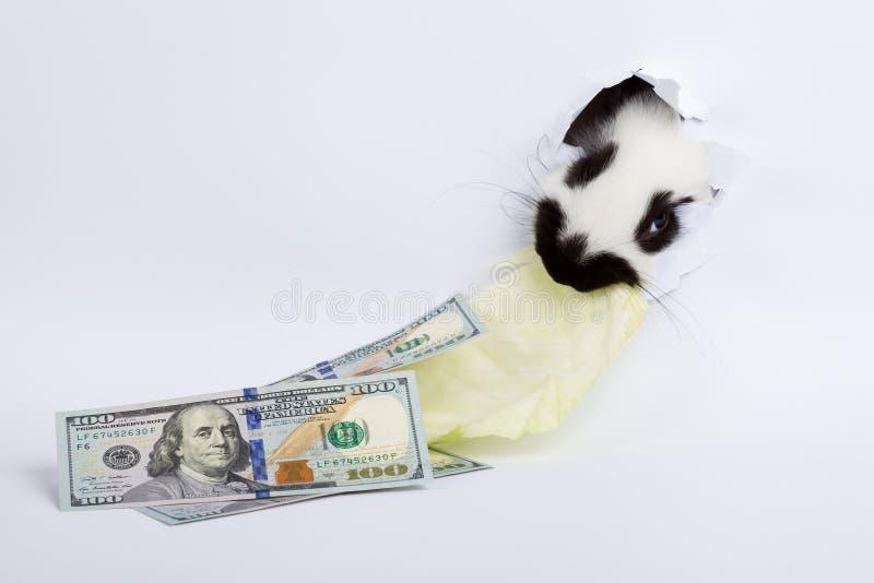 White rabbit royalty free stock photography