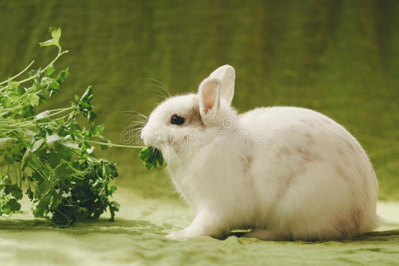 White rabbit on green background royalty free stock image