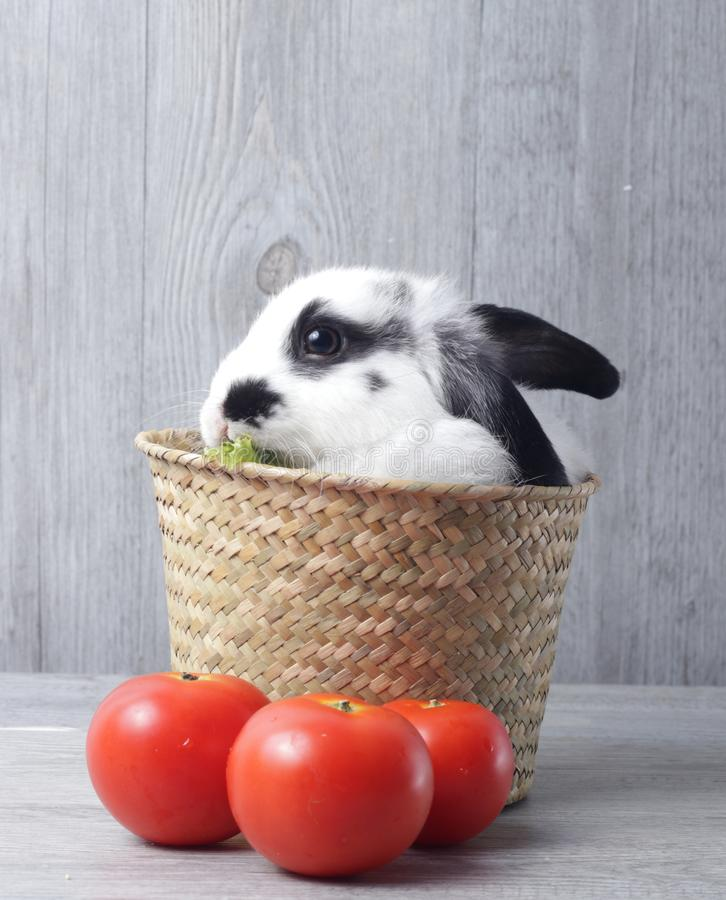 White Rabbit on Grey Background stock photos