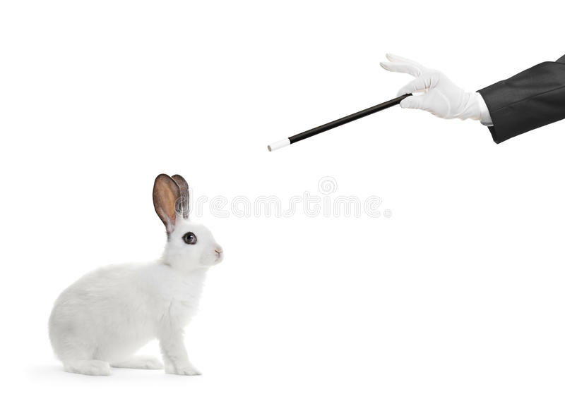 A white rabbit and a hand holding a magic wand stock images