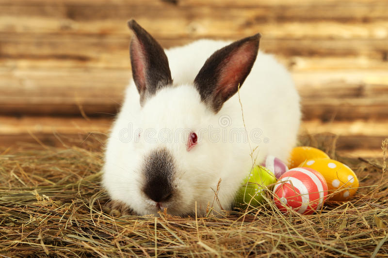 White rabbit in hay with painted eggs on brown wooden background stock photo