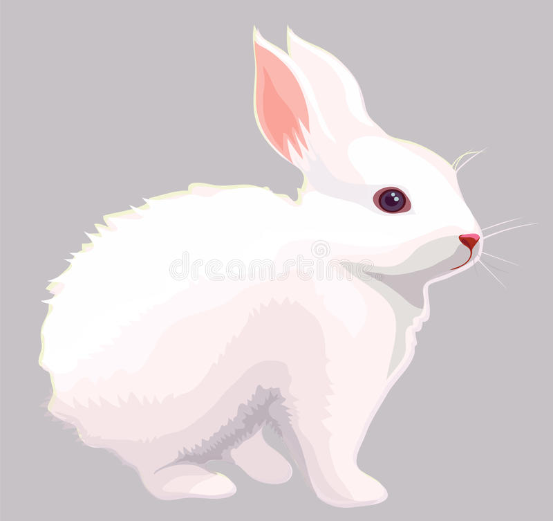 White rabbit vector illustration