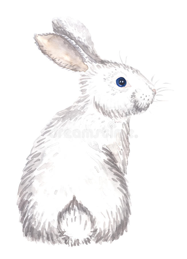 White rabbit isolated. Watercolor hand-drawn white rabbit isolated on white vector illustration