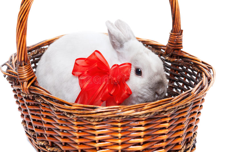 White rabbit with ribbon. White rabbit with red ribbon in a basket isolated on white background royalty free stock photography