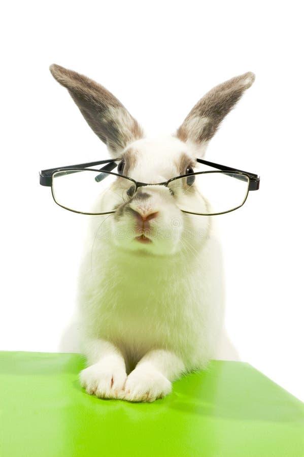 Free White Rabbit Wearing Glasses Stock Photo - 10478090