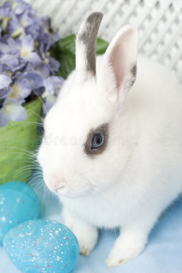 Free White Rabbit With Blue Easter Eggs Stock Image - 8794091