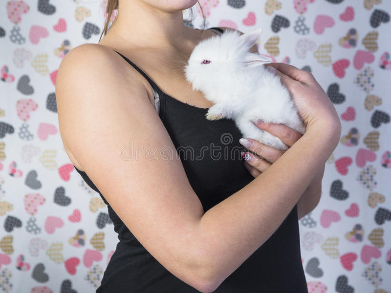 White rabbit in woman hands. stock image