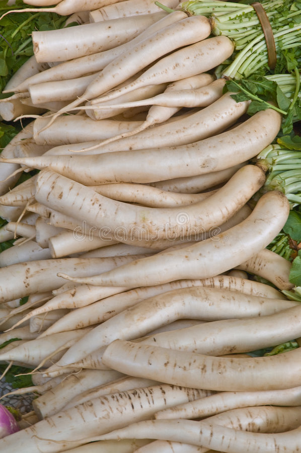 Download White Radish stock image. Image of eating, grown, cooked - 7194143