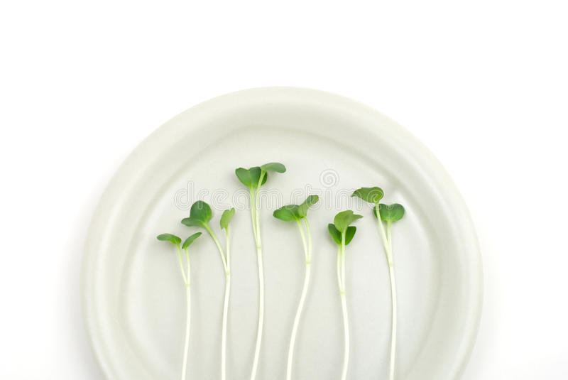 Download White radish sprouts stock photo. Image of meal, winter - 19620382