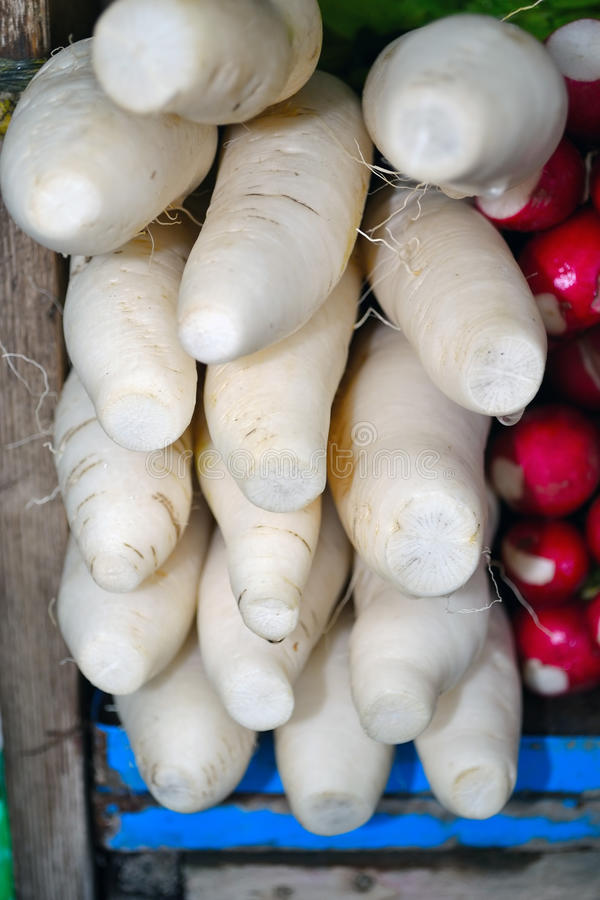 White Radish Texture royalty free stock image