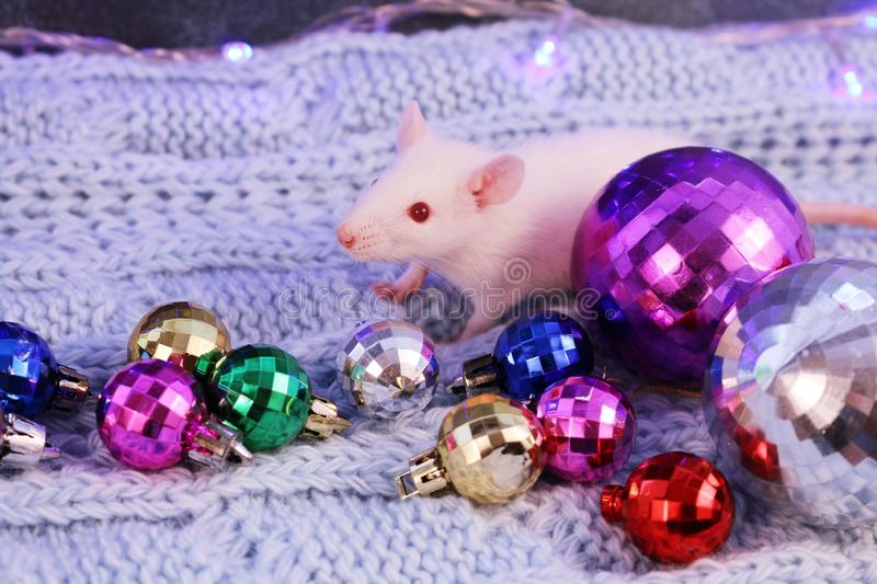 White rat with multicolored christmas balls, symbol of the new year 2020 stock photos
