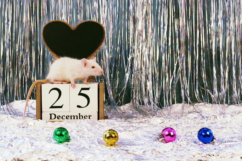 White rat sitting on wooden block calendar with christmas decorations, symbol of the new year 2020 royalty free stock photo