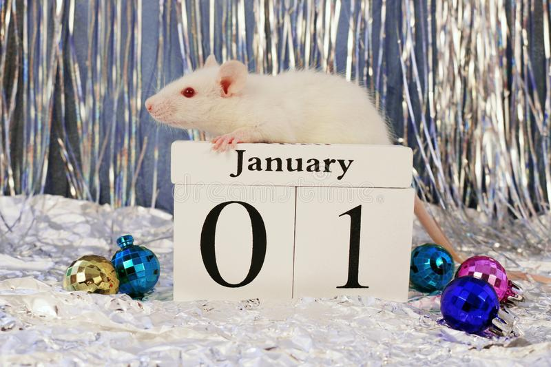White Rat Sitting On Wooden Save The Date Calendar With Christmas