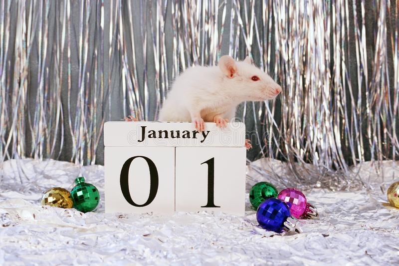 White rat sitting on wooden calendar with christmas decorations, symbol of the new year 2020 stock photos