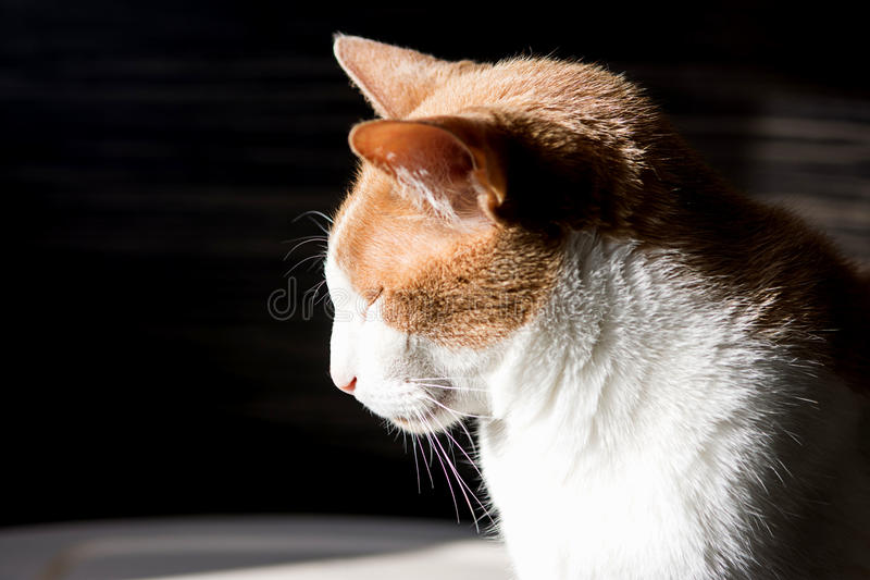 White with red cat. Real best cat photo royalty free stock photography