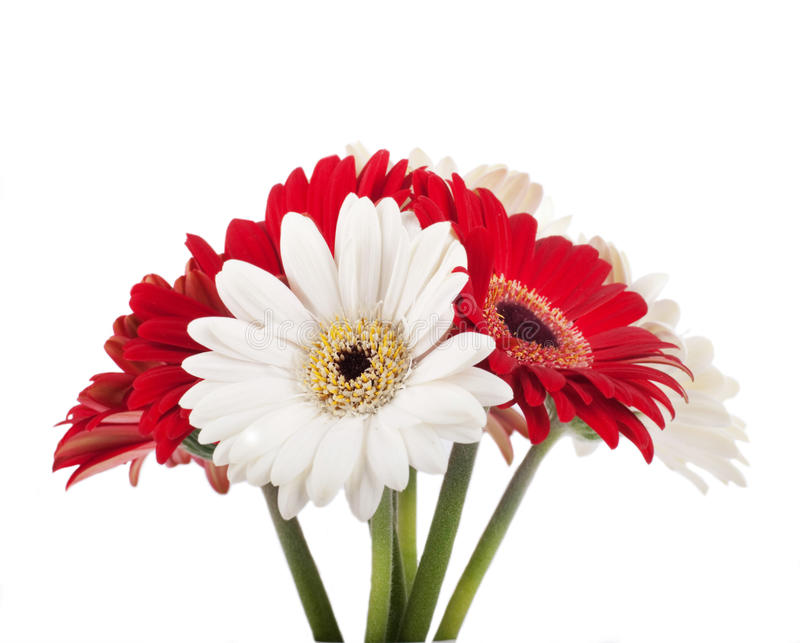 White and red flowers bouquet stock image image of beautiful download white and red flowers bouquet stock image image of beautiful isolated mightylinksfo