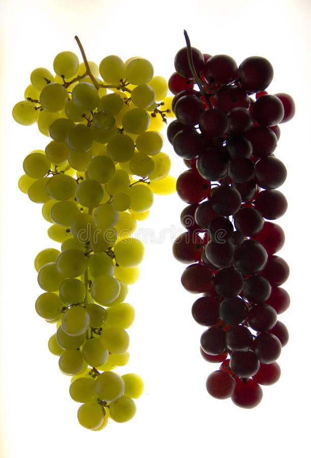 Download White and red grapes stock photo. Image of grapes, cluster - 27017372