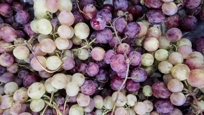 White and red or purple raw grapes. Autumn fruits display for sale at marketplace. Direct sun light rays, natural feeling,. Selective focus, organic bio grapes stock photo