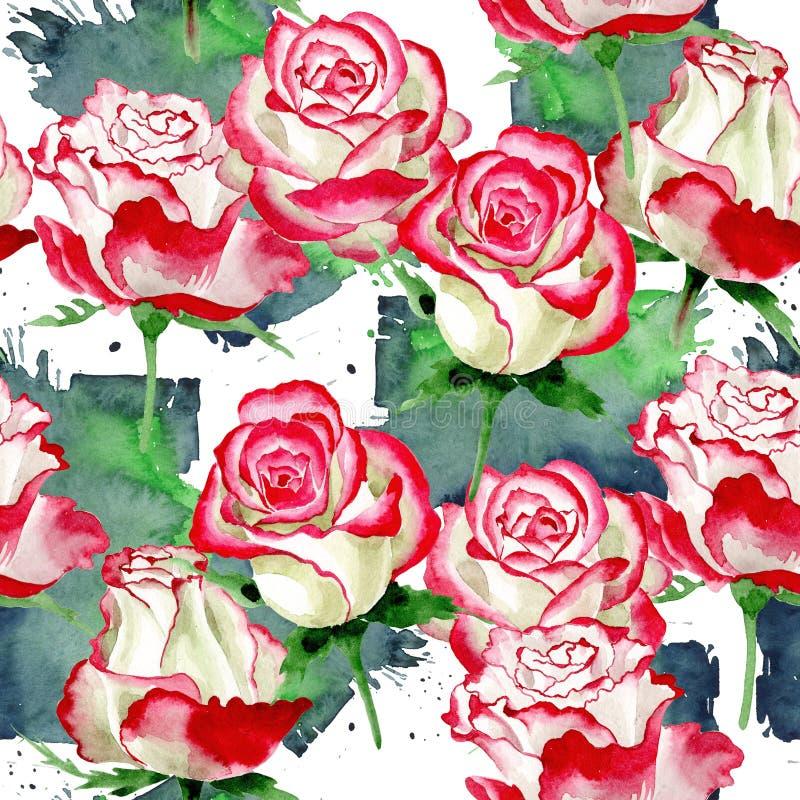White-red rose. Floral botanical flower. Wild spring leaf wildflower pattern. Aquarelle wildflower for background, texture, wrapper pattern, frame or border royalty free illustration