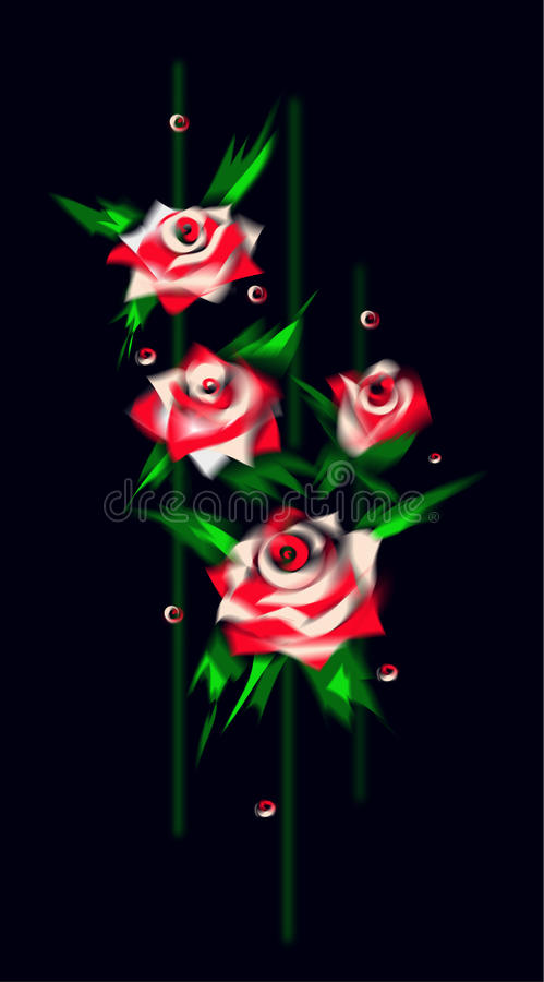 White And Red Roses On Balck Background Stock Photo
