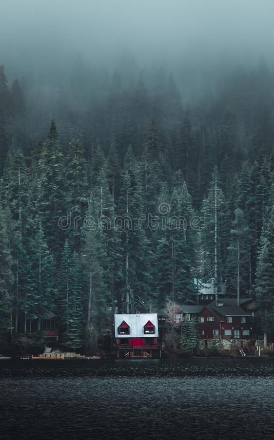 White and Red Wooden Cabin Near Forest stock photo