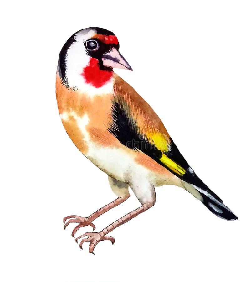 White-red-yellow bird flapper. Cute bright white-red-yellow with black spots bird flapper with shiny eyes sitting stock illustration