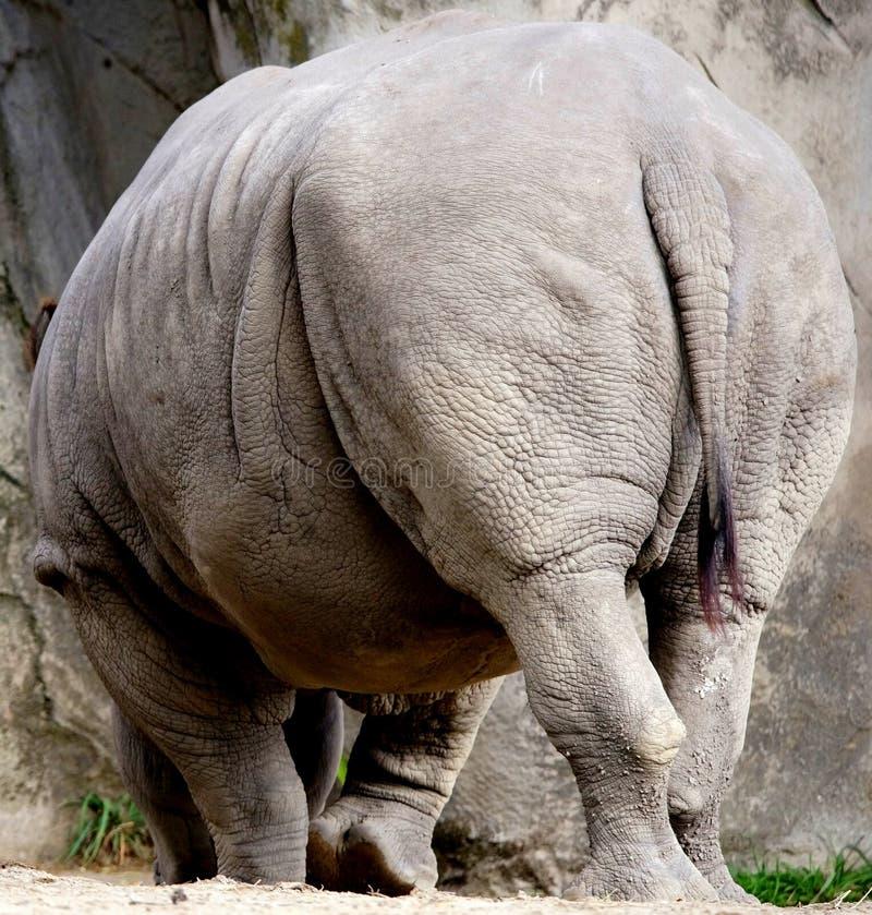 Free White Rhino Stock Images - 45972354