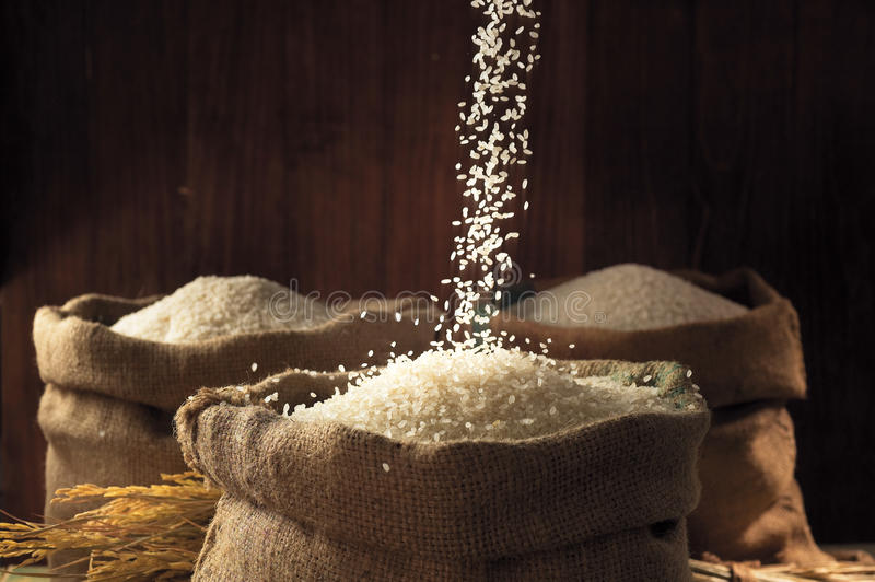 Download White rice stock image. Image of indian, brown, cafeteria - 16158091