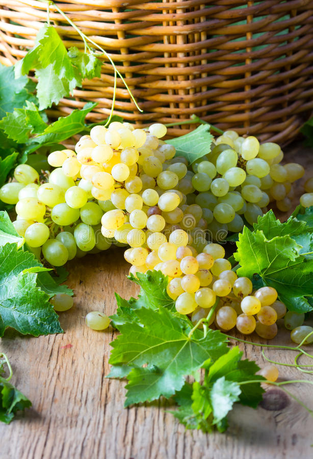 White ripe grape clusters. And basket on wooden background royalty free stock photo