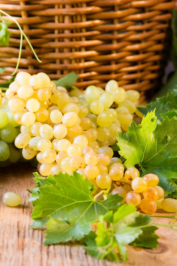 White ripe grape clusters. And basket on wooden background stock images