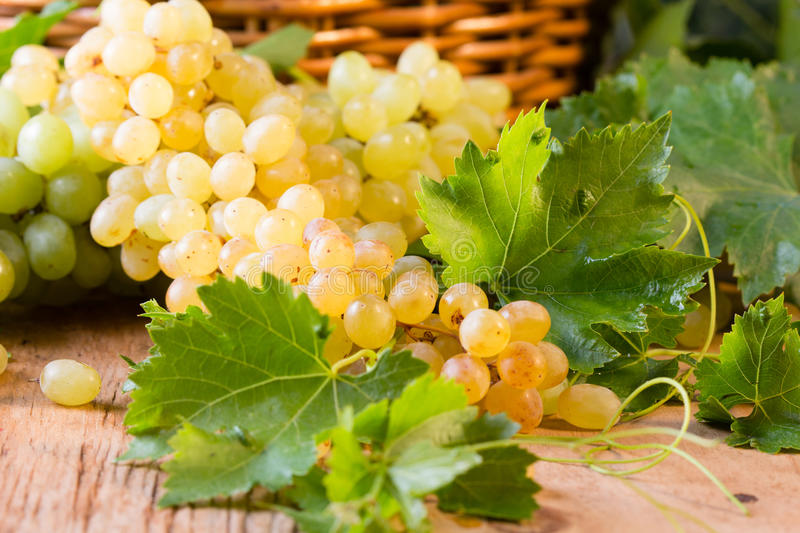 White ripe grape clusters. And basket on wooden background royalty free stock photography