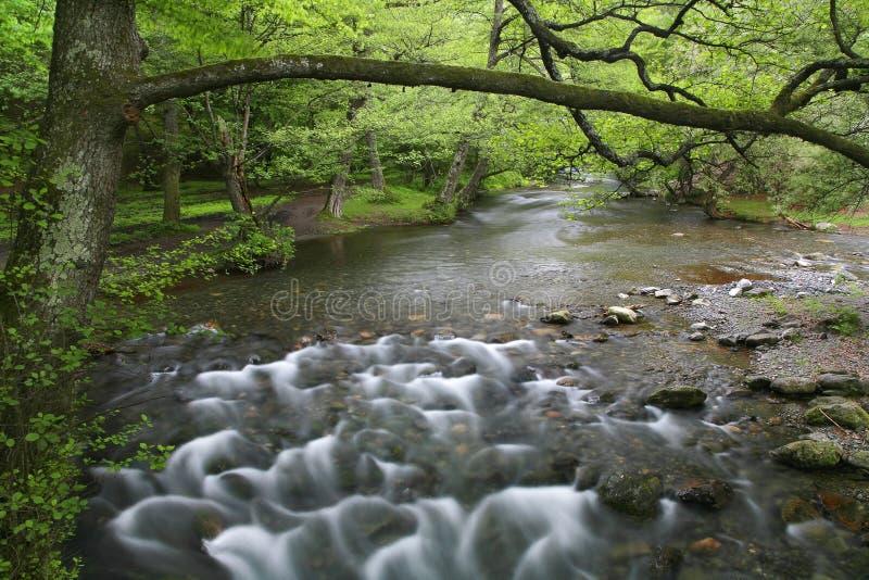 White River Royalty Free Stock Photo
