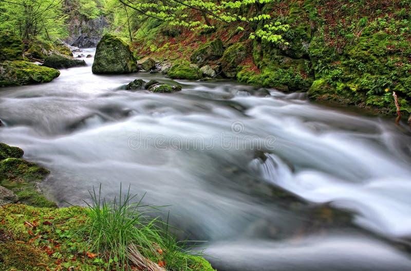 White river royalty free stock photos