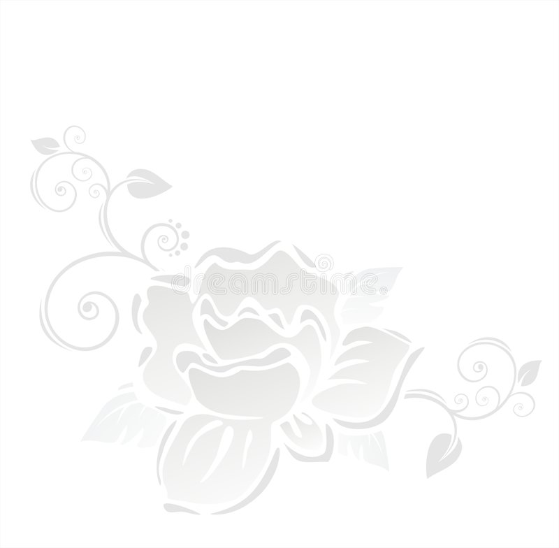 Download White rose stock vector. Image of romance, image, shadow - 2319947