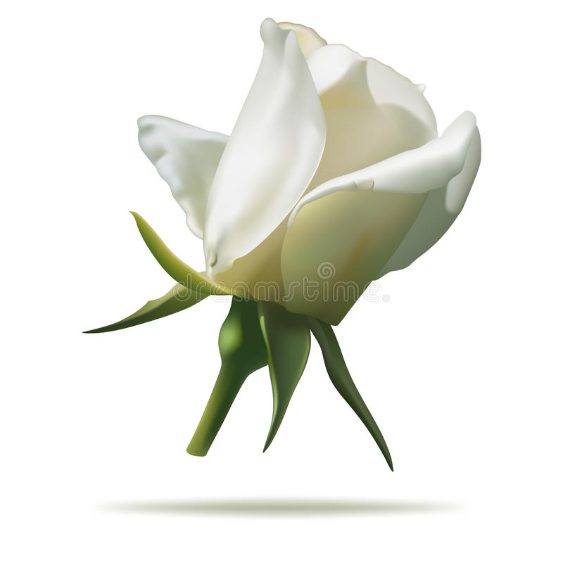 Free White Rose Stock Photos - 59677023