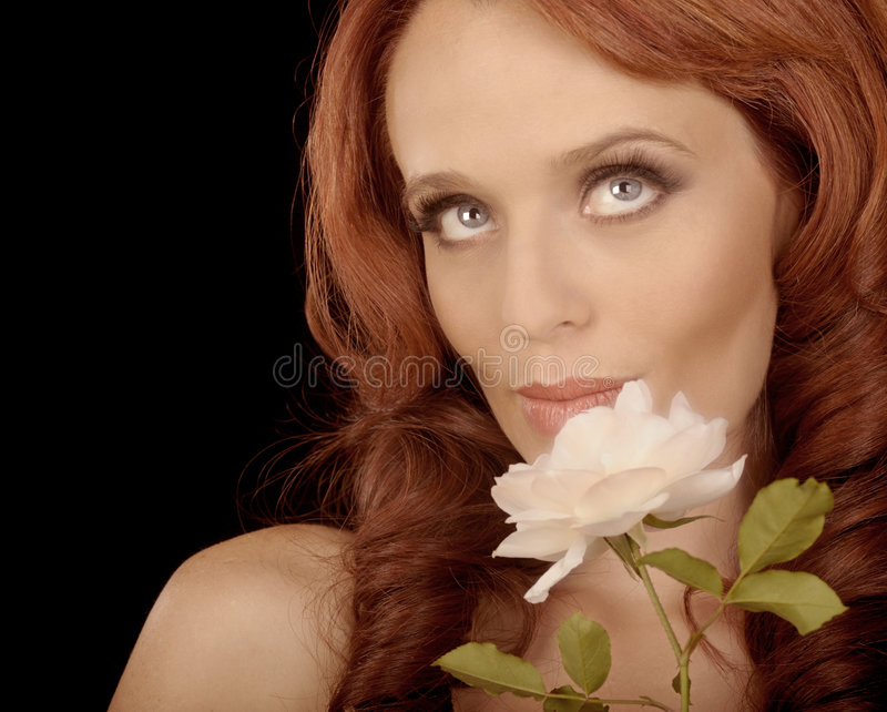 Download The White rose stock image. Image of american, makeup - 9119703