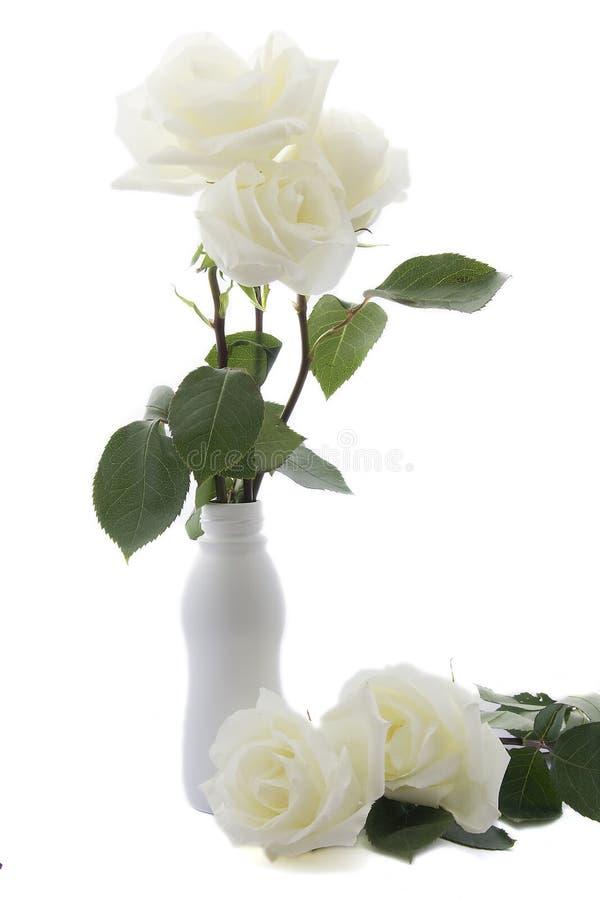 Free White Rose Stock Photo - 9830900
