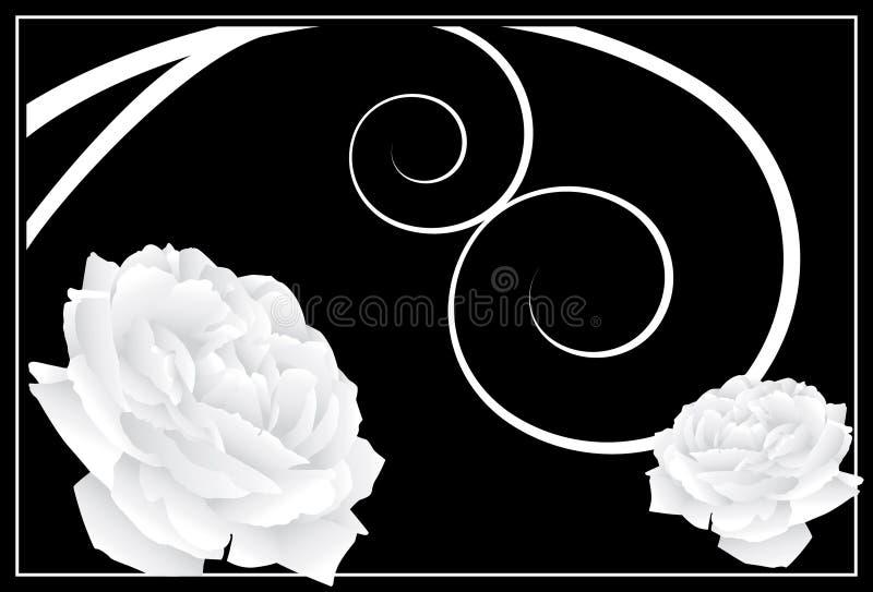 White Rose Background stock illustration
