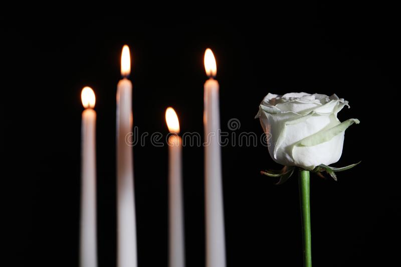 White rose and blurred burning candles in darkness royalty free stock photography