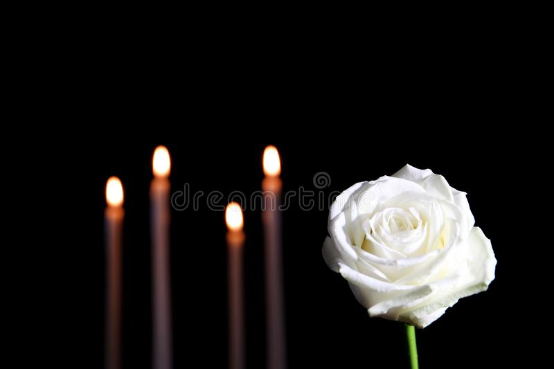White rose and blurred burning candles in darkness, space for text royalty free stock photography