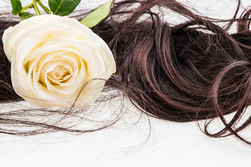 White rose on brown hair royalty free stock images