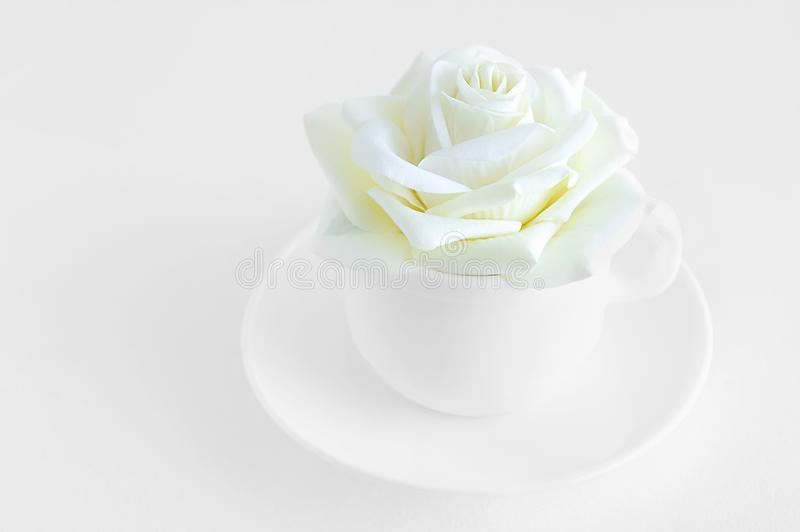 White rose bud in a white cup. stock images