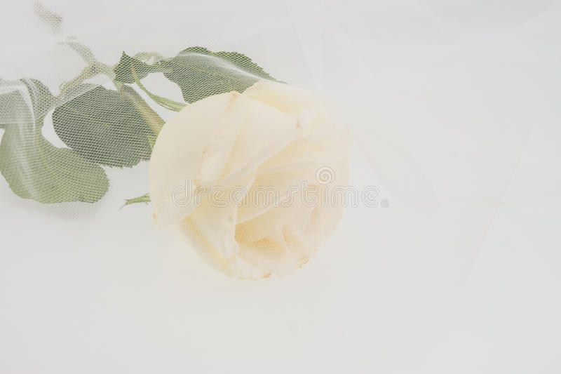 White rose covered by wedding veil stock photography