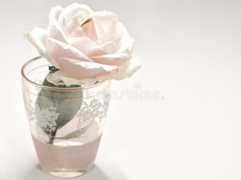 White Rose Flower in Clear Drinking Glass royalty free stock photo
