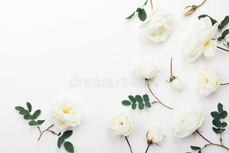 White rose flowers and green leaves on light background from above. Beautiful floral pattern in flat lay styling royalty free stock image
