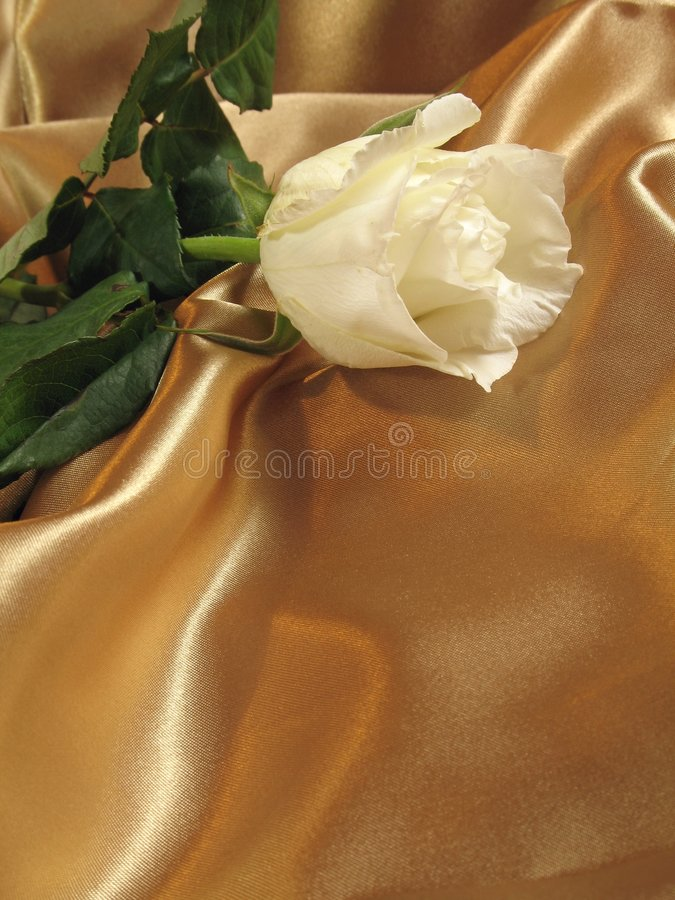 White rose on gold satin. A delicate white rose on a loosely laid sheet of gold satin, with copy-space stock photos