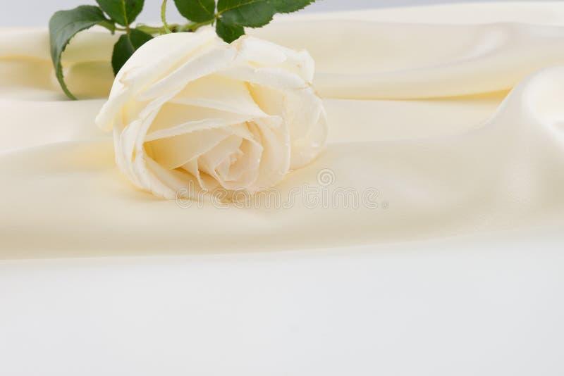 White rose on ivory silk satin stock photography